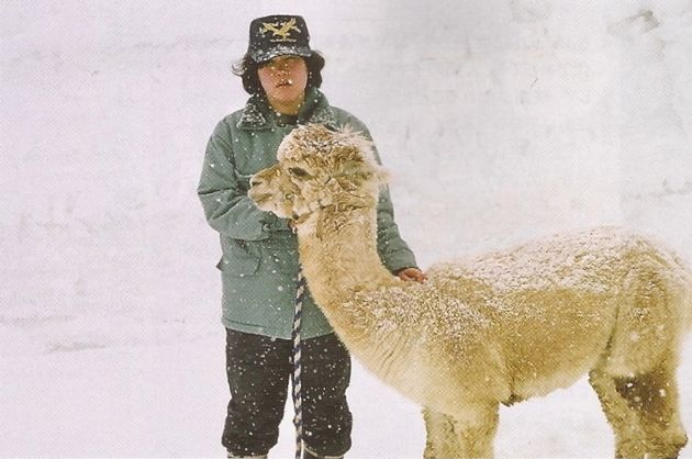 Winter Alpaca.jpg