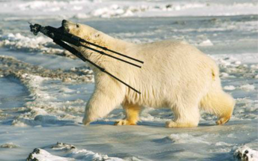 AFM 2012: Zombie Polar Bears To Be Unleashed In COLD PATROL