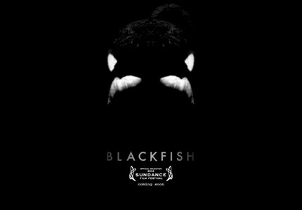 Sundance 2013 Review: BLACKFISH is an Important Look at Animal Captivity