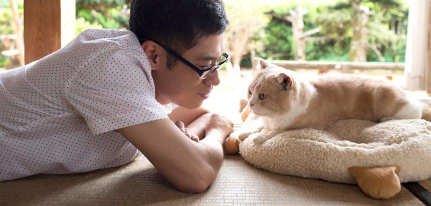 Gotta Pet Them All. Live Action NEKO ATSUME Film Arrives In 2017.
