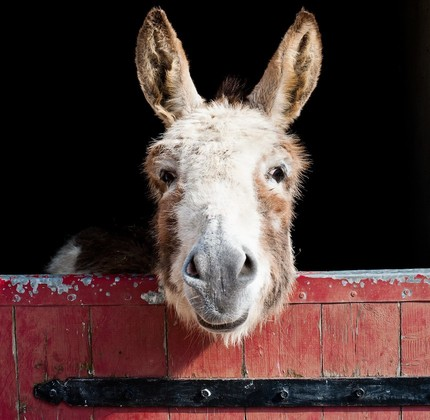 Review: DO DONKEYS ACT? Where Poetry and Empathy Get Curiously Cozy