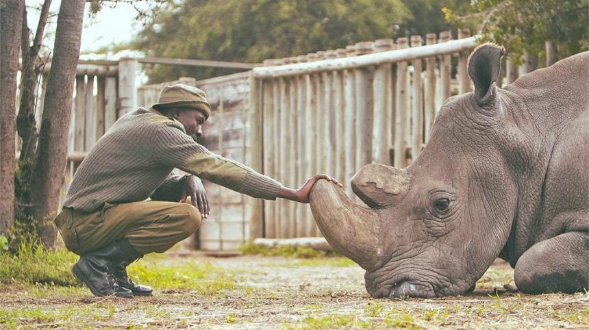 Slamdance 2019: Exclusive KIFARU Clip - Calming a Rhino