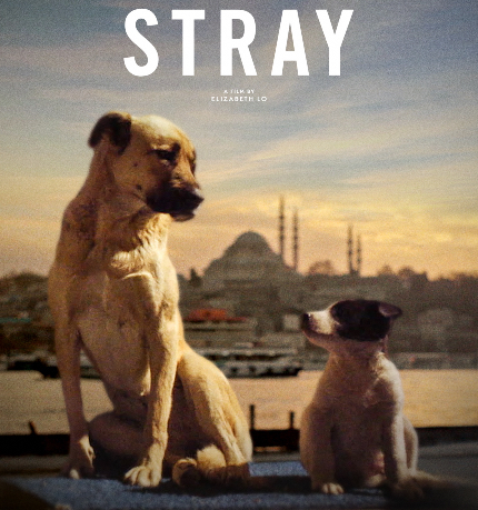 Review: STRAY, Born to Be Wild